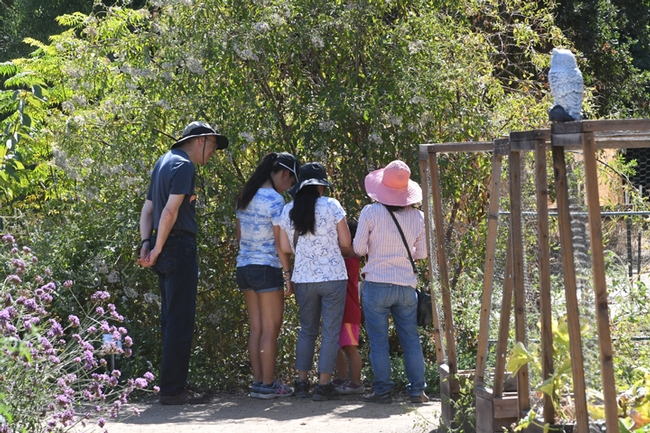 Flowers and bees drew the attention of these visitors in the Häagen-Dazs Honey Bee Haven. (Photo by Kathy Keatley Garvey)