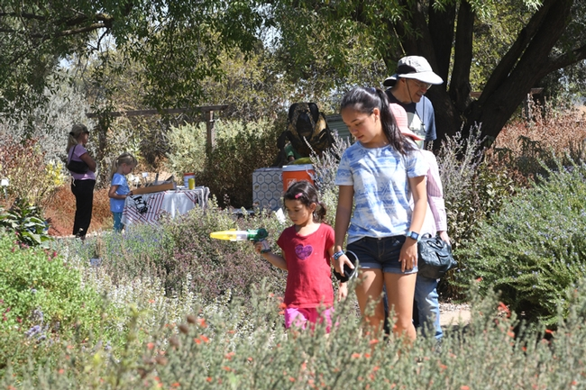 A catch-and-release bee activity highlighted the Häagen-Dazs Honey Bee Haven open house. (Photo by Kathy Keatley Garvey)