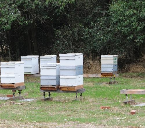 BRICKS mark the spot where yellowjackets are nesting at the Harry H. Laidlaw Jr. Honey Bee Research Facility. (Photo by Kathy Keatley Garvey)