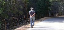 Art Shapiro, distinguished professor of evolution and ecology at UC Davis, walks along one of his study areas, Gates Canyon Road, Vacaville. This image was taken Jan. 25, 2014. (Photo by Kathy Keatley Garvey) for Bug Squad Blog