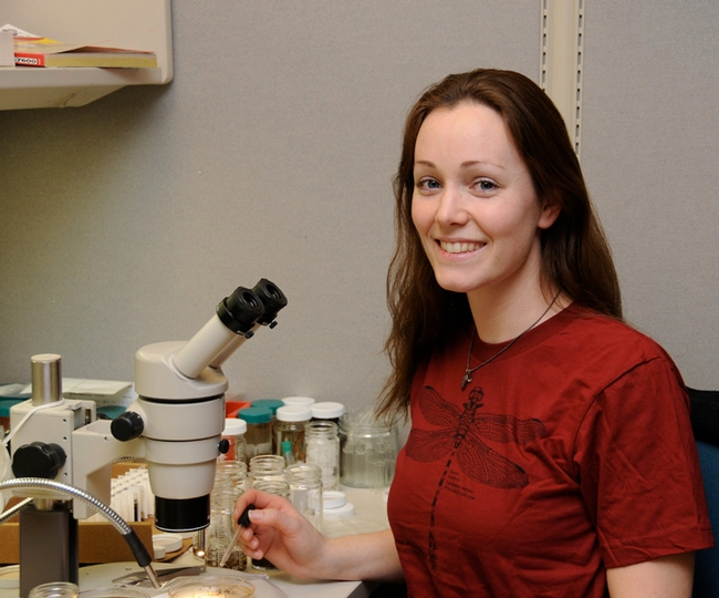 Danielle Wishon, shown here in 2011 at the Bohart Museum of Entomology, will be back at the Bohart on Saturday, Jan. 12 to participate in an open house. (Photo by Kathy Keatley Garvey)