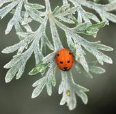 Cool Ladybug