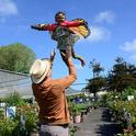 Pollinator Posse member, Seth Newton Patel of Oakland watches his 4-year-old daughter Saathiya Patel, 4, dressed as a monarch butterfly, take flight.  (Photo by Kathy Keatley Garvey)