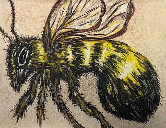 Dixon 4-H'er Madeline Giron sketched this color pencil drawing of a bee, on display in the Youth Building (Denverton Hall) at the Dixon May Fair. (Photo by Kathy Keatley Garvey)