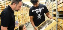 UC Davis entomology student and Bohart associate Lohit Garikipati shows butterfly specimens to Olivia Bingen, 4, and her father, Steve Bingen of the UC Davis Department of Music. (Photo by Kathy Keatley Garvey) for Bug Squad Blog