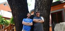 Forest entomologists Steve Seybold (right) and Jackson Audley stand by a 150-year-old black walnut tree on the 100 block of E Street. It is dying of thousand cankers disease. (Photo by Kathy Keatley Garvey) for Bug Squad Blog