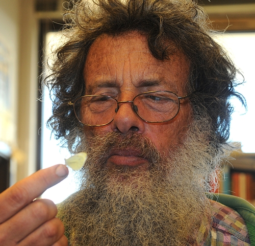 NOTED BUTTERFLY EXPERT Art Shapiro, professor of evolution and ecology at UC Davis,  with the cabbage white butterfly perched on his finger. (Photo by Kathy Keatley Garvey)