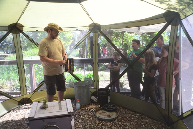 Matthew Hoepfinger, staff research associate in the E. L. Niño lab,  presented the live bee demonstration. (Photo by Kathy Keatley Garvey)