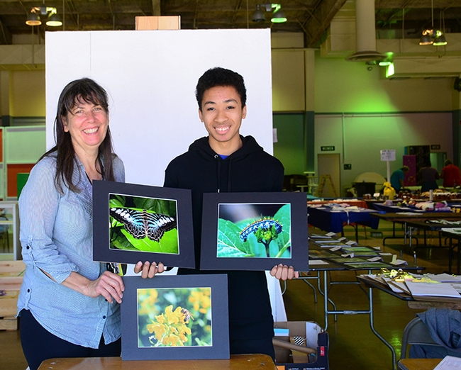Insects, we have insects! Gloria Gonzalez, superintendent of McCormack Hall and assistant Jarod Fernander show some of the insect-themed entries. The butterfly is a Blue Xlipper, Parthenos sylvia ssp. lilacinus, from southeast Asia, as  identified by Art Shapiro, UC Davis distinguished professor of evolution and ecology. In the background are entries ready to be judged or displayed. The fair runs June 27-30. (Photo by Kathy Keatley Garvey)