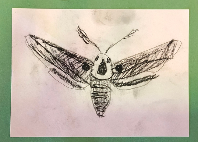 This pencil sketch of a moth is by Alana Boman of the Sherwood Forest 4-H Club, Vallejo, who entered it in 4-H youth graphics arts, ages 5 to 8, in McCormack Hall, Solano County Fair. The fair runs June 27-June 30. (Photo by Kathy Keatley Garvey)