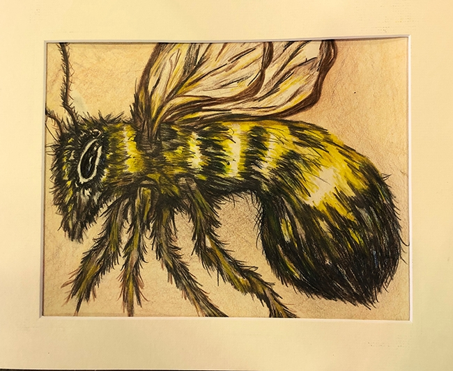 Madeline Giron of Benicia entered this drawing of a bee in youth graphics arts, ages 14 and over, in McCormack Hall,Solano County Fair. (Photo by Kathy Keatley Garvey)