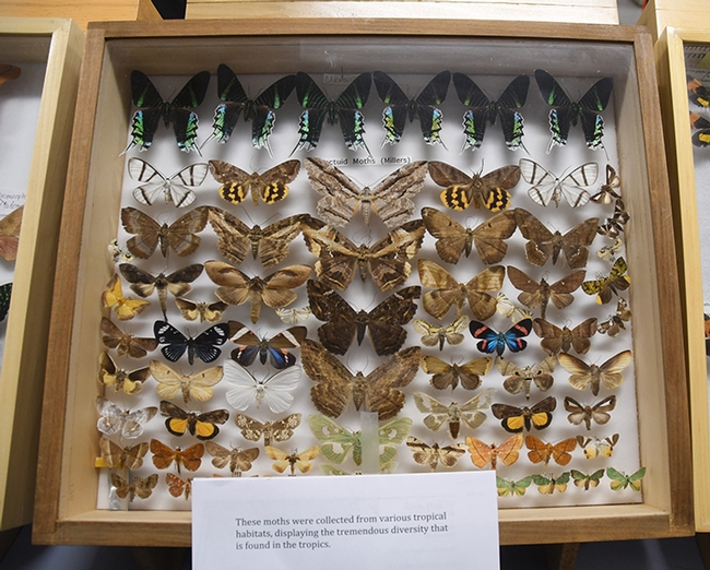 A display of moth specimens at the Bohart Museum of Entomology's 2018 Moth Night. (Photo by Kathy Keatley Garvey)