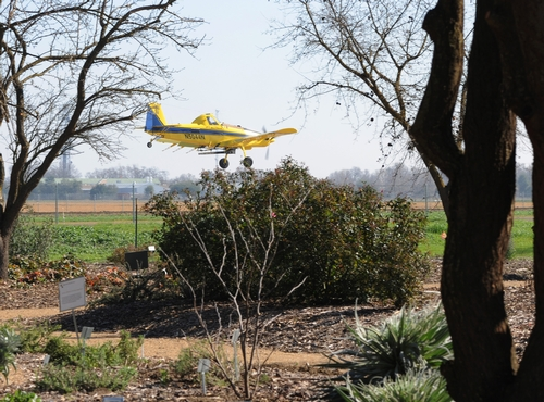 YELLOW AIRCRAFT and a yellow butterfly shared air space off Bee Biology Road on Feb. 7. This plane was practicing its takeoffs and landings at the University Airport. An apparent show of mimicry? (Photo by Kathy Keatley Garvey)