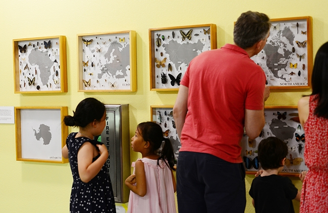 Visitors read the display in the Bohart Museum hallway. (Photo by Kathy Keatley Garvey)