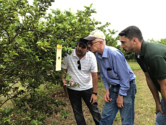UC Davis chemical ecologist Walter Leal (center) examines a lure in Mogi Mirin, São Paulo on Brazil's Independence Day (Sept. 7) with Haroldo Volpe (far right) and  Renato de Freitas, both of Fundecitrus.