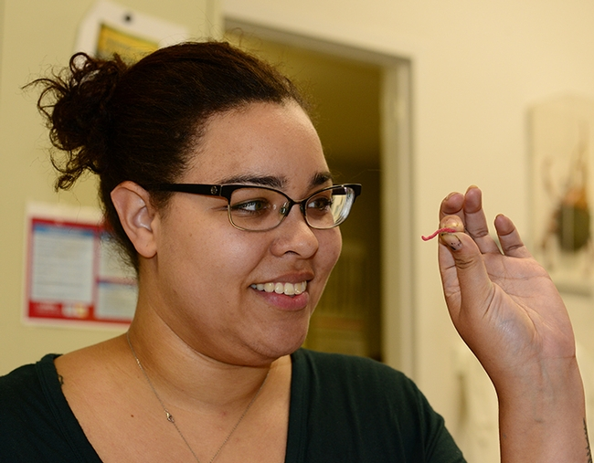 Biologist Iris Bright checks out a red earthworm, one of the items available for sampling at the Bohart Museum of Entomology's open house on Sept. 21. (Photo by Kathy Keatley Garvey)