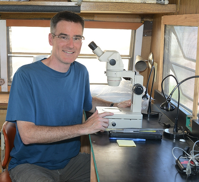 UC Davis pollination ecologist Neal Williams is a newly inducted Fellow of the California Academy of Sciences. (Photo by Kathy Keatley Garvey)
