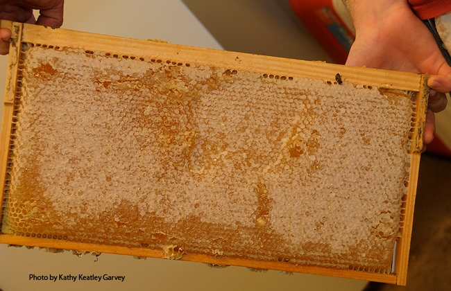 Honey doesn't come from a jar you buy in a store; it comes from a frame. (Photo by Kathy Keatley Garvey)