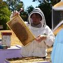 Extension apiculturist Elina Lastro Niño of the UC Davis Department of Entomology and Nematology faculty and director of the California Master Beekeeper Program, opens a hive. She will provide a UC Davis reserach update on Friday. (Photo by Kathy Keatley Garvey)