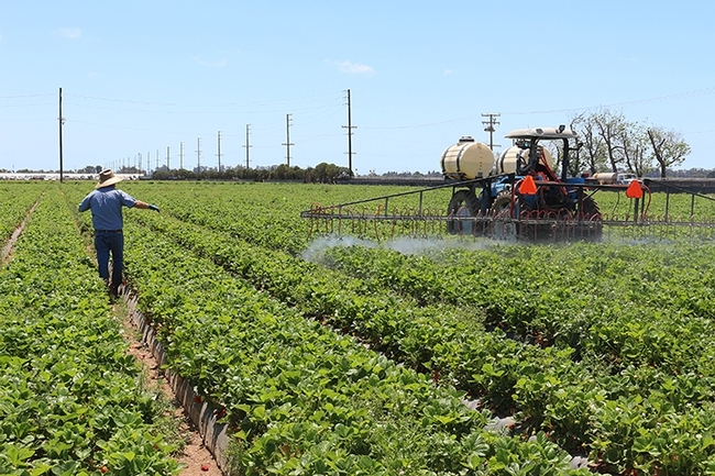 Spraying a strawberry field. (Photo by Christian Nansen)