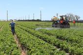 Spraying a strawberry field. (Photo by Christian Nansen)