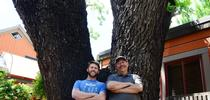 Forest entomologist and chemical ecologist Steve Seybold and doctoral student Jackson Audley by a downtown Davis tree with thousand cankers disease. (Photo by Kathy Keatley Garvey) for Bug Squad Blog