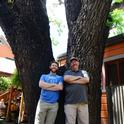 Forest entomologist and chemical ecologist Steve Seybold and doctoral student Jackson Audley by a downtown Davis tree with thousand cankers disease. (Photo by Kathy Keatley Garvey)