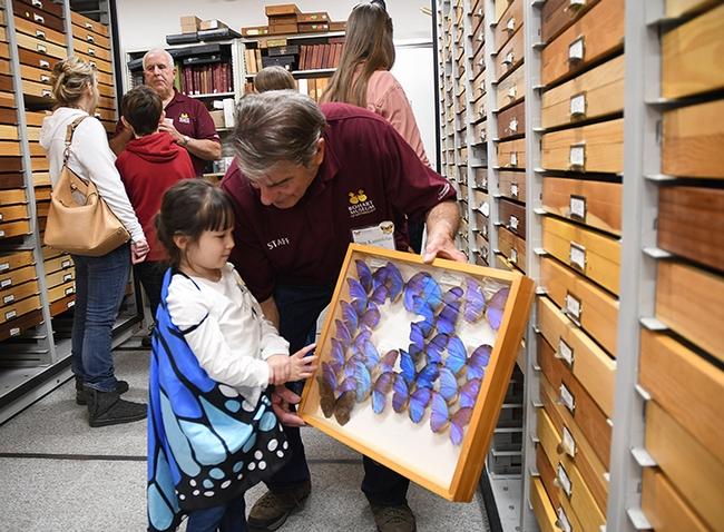 Tien Ferreira, 4, of Fairfield, wearing her blue butterfly cape, looks at the blue morpho butterflies held by Bohart associate Greg Karofelas. (Photo by Kathy Keatley Garvey)