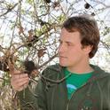 Ian Pearse examines  oak apple galls. (Photo by Kathy Keatley Garvey)