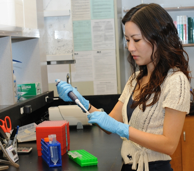 Molecular geneticist Joanna Chiu at work in her lab at UC Davis. (Photo by Kathy Keatley Garvey)