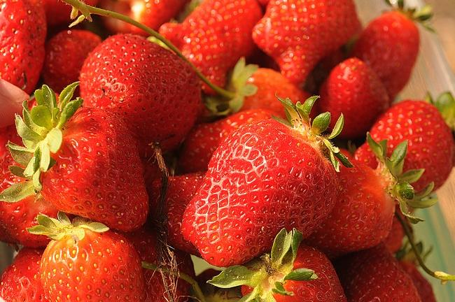 End result: ripe strawberries. (Photo by Kathy Keatley Garvey)