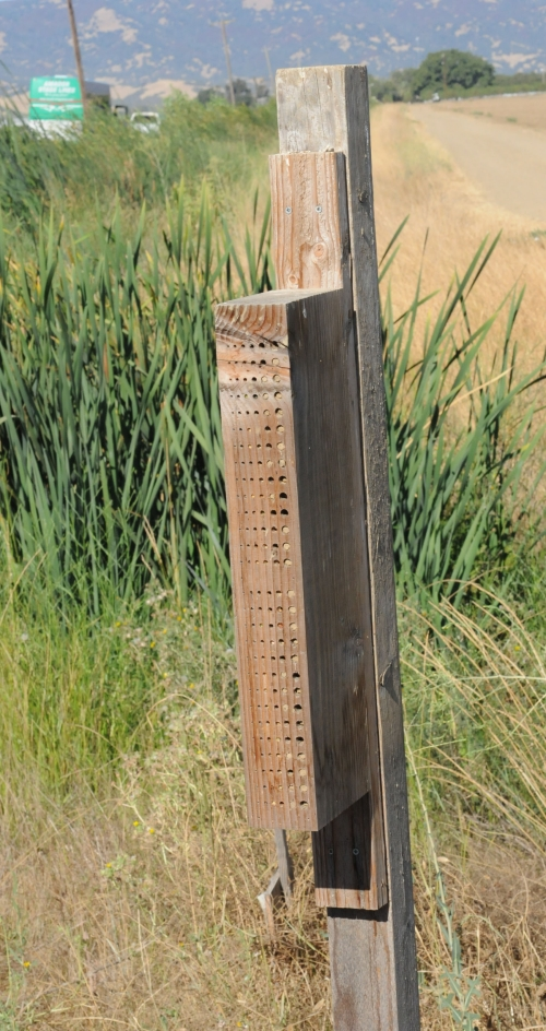 This is a bee nesting block built to attract native pollinators.  (Photo by Kathy Keatley Garvey)