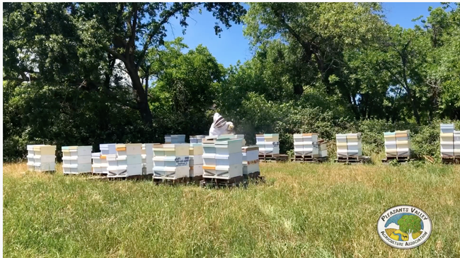 These are some of the bee hives that Clay Ford of the Pleasants Valley Honey Company, also known as Clay's Bees, lost to the Vacaville Fire. (Photo from YouTube video, Pleasants Valley Agricultural Association)