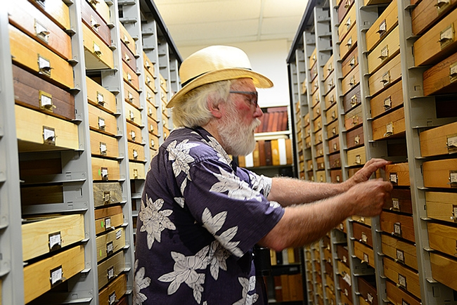 Robert Michael Pyle searches pulls out drawers of butterfly specimens at the Bohart Museum of Entomology. (Photo by Kathy Keatley Garvey)