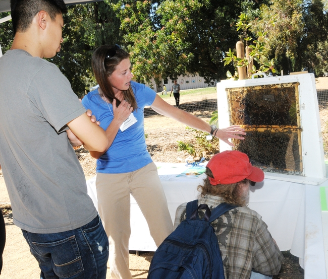 Insect virus researcher Michelle Flenniken, the Haagen-Dazs Postdoctoral Fellow at UC Davis, explains a bee colony. (Photo by Kathy Keatley Garvey)