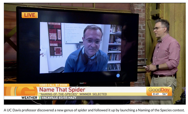A screen shot of the TV program, Good Day Sacramento, featuring Jason Bond, the trapdoor spider he discovered, and the name-that-species contest.  See https://gooddaysacramento.cbslocal.com/video/4770491-name-that-spider/