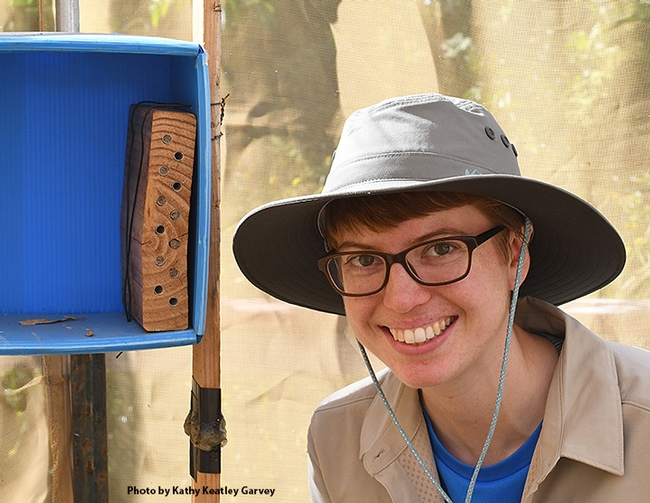 UC Davis doctoral student Clara Stuligross by her blue orchard bee nests in the spring of 2018. (Photo by Kathy Keatley Garvey)