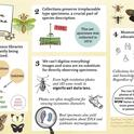 This is the infographic that won Jill Oberski a first-place award in the Entomological Society of America's graduate student competition.