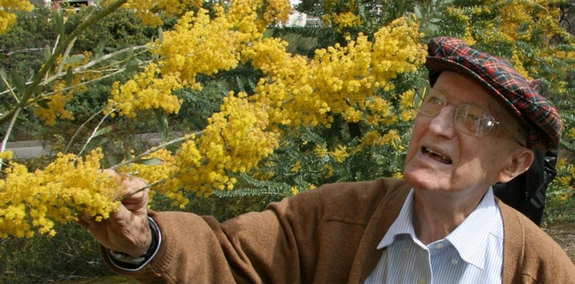 Eric Conn, a noted plant biochemist, nurtured the UC Davis Arborteum's acacias for scientific as well as aesthetic reasons. He died in 2017 at age  94. (UC Davis Photo)