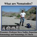 Nematologist Steve Nadler, professor and chair of the UC Davis Department of Entomology and Nematology, presenting a video on nematology. (Screen shot)