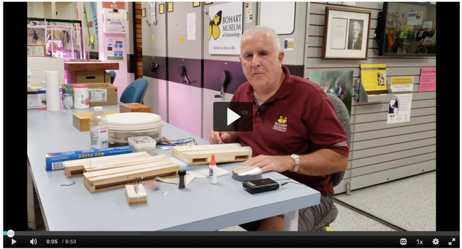 Entomologist Jeff Smith, who curates the Lepidoptera collection, Bohart Museum of Entomology, explains how to pin and spread butterfly and moths for display. (Screen shot)
