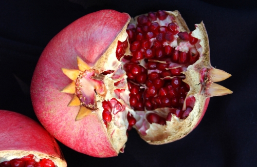 Four months after the pomegranate tree blossomed, this is the result: crimson jewels. (Photo by Kathy Keatley Garvey)