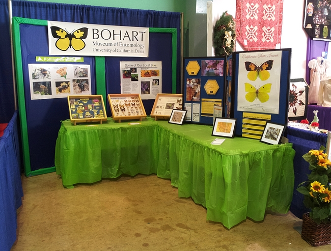 Colorful display by the Bohart Museum of Entomology at McCormack Hall, Solano County Fair. (Photo by Elisa Seppa)