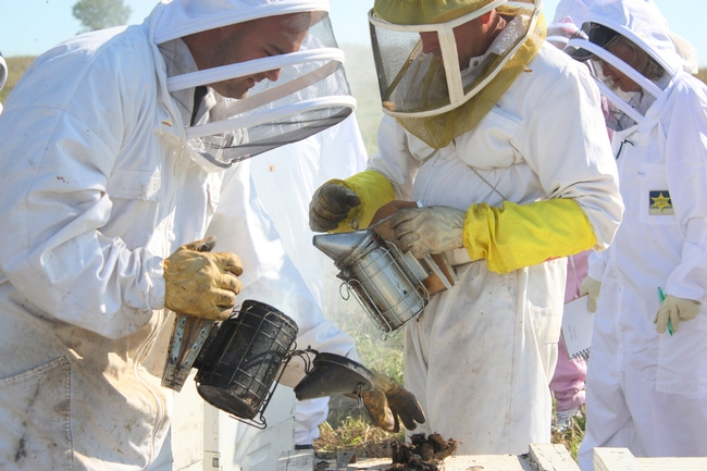 Beekeeper John Miller (right, with yellow gloves and smoker) tending his hives.  Copyrighted photo, 2010, by Melody Owen, used with permission.