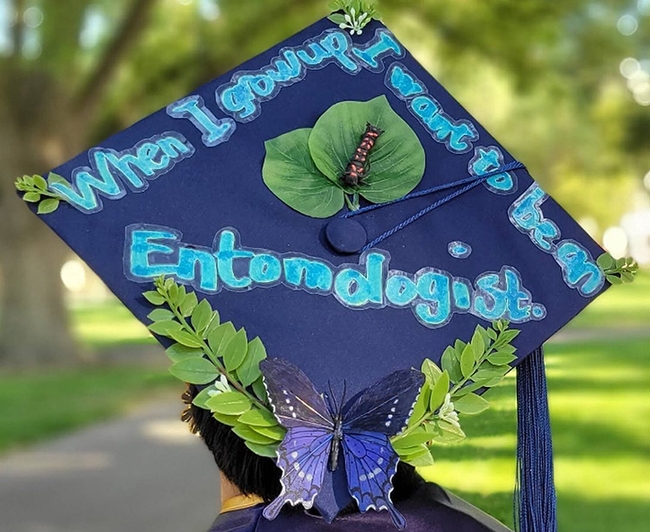 This insect-themed graduation cap is in the running for UC Davis prizes. RJ Millena's first project involved the California pipevine swallowtail (Battus philenor). See caterpillar.(Photo by Kaylee Fagan)