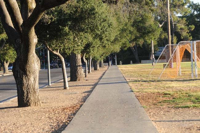 Site of the springtail sightings on Howard Way, looking toward Russell Boulevard on UC Davis campus. (Photo by Kathy Keatley Garvey)