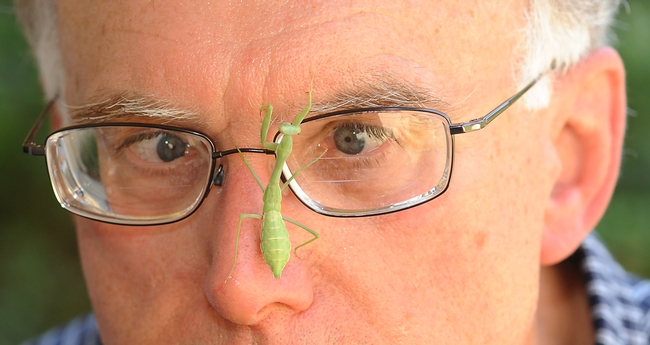Extension apiculturist Eric Mussen of the UC Davis Department of Entomology peers at a praying mantis. (Photo by Kathy Keatley Garvey)
