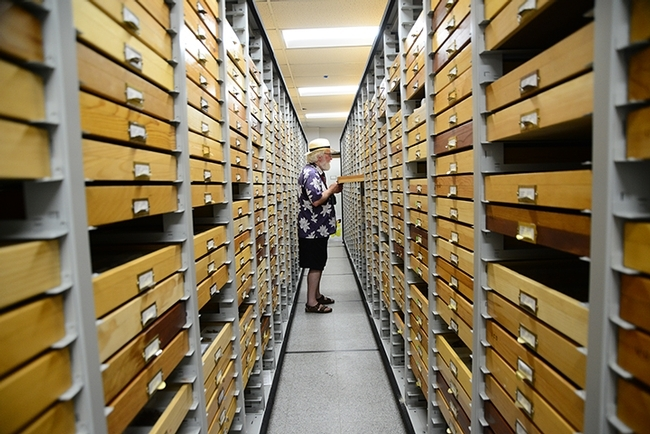Scholar, writer, biologist and educator Robert Michael Pyle visiting the UC Davis Bohart Museum of Entomology lepidoptera collection in July of 2019. (Photo by Kathy Keatley Garvey)