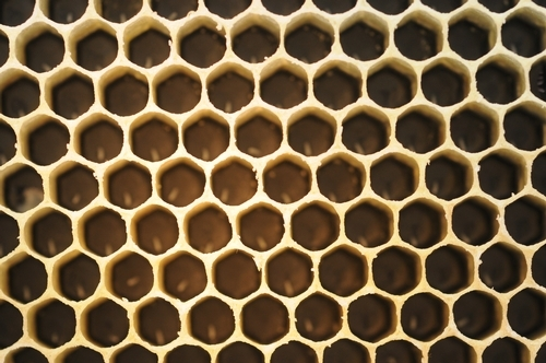 Honey bee cells: this queen has been busy.  (Photo by Kathy Keatley Garvey)