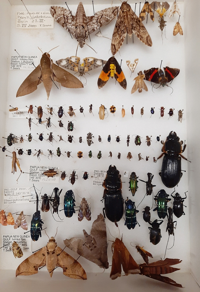 This is part of the Bohart Museum of Entomology collection that will be gifted to Atatürk University, Turkey. (Bohart Museum photo)